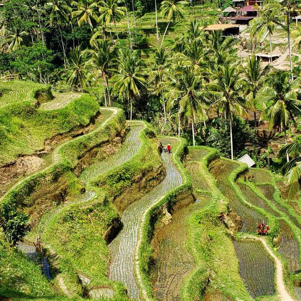 Tegalalang Rice Terraces Bali